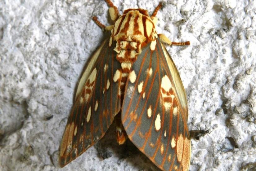 Em quatro dias, Paranaguá tem mais de 500 casos de alergia por contato com mariposas